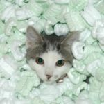 Recycle Used Packing Peanuts - Not the Cat